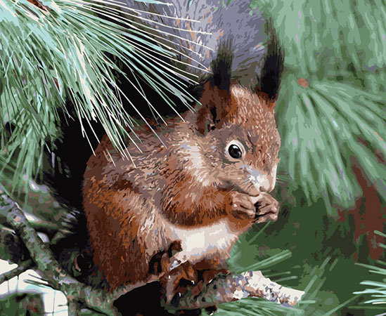 Malen nach Zahlen Bild Portrait eines Eichhörnchens  - H003 von Artibalta