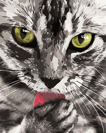 Malen nach Zahlen Bild Katze - H031 von Sonstiger Hersteller