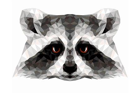 Polygon Waschbär