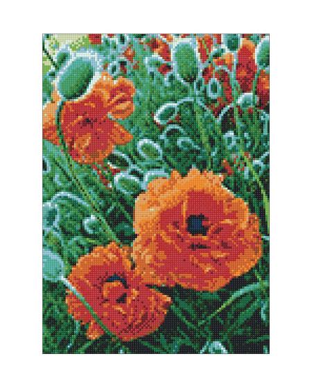 Malen nach Zahlen Bild Feldblumen - WD012 von Sonstiger Hersteller