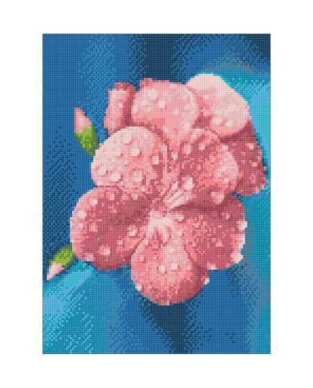 Malen nach Zahlen Bild Bezaubernde Morgenblume - WD018 von Sonstiger Hersteller