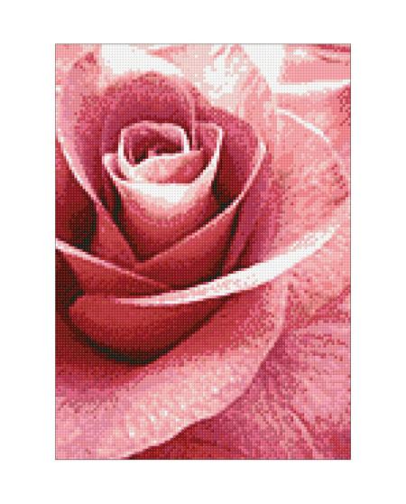 Malen nach Zahlen Bild Pink Rose - WD019 von Sonstiger Hersteller
