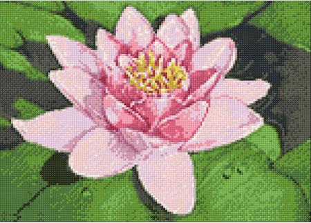 Malen nach Zahlen Bild Lotus auf dem See - WD032 von Sonstiger Hersteller