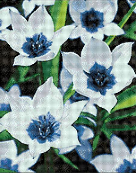 Malen nach Zahlen Bild Blauaugen Tukpen - WD034 von Sonstiger Hersteller