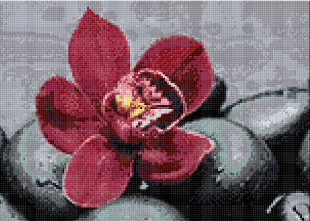 Malen nach Zahlen Bild Königliche Orchidee - WD036 von Sonstiger Hersteller