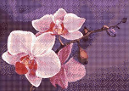 Malen nach Zahlen Bild Rosa Orchidee - WD038 von Artibalta