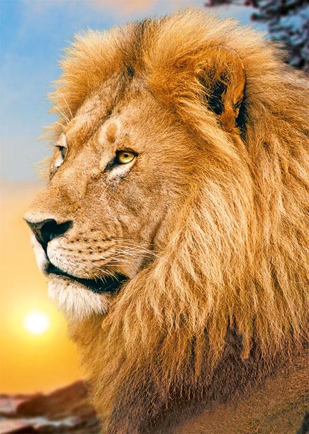 Majestätischer Löwe