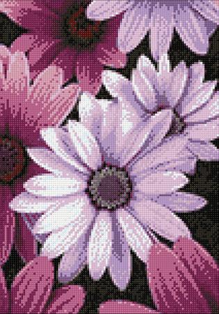 Malen nach Zahlen Bild Lilafarbene Gänseblümchen - WD2306 von Sonstiger Hersteller