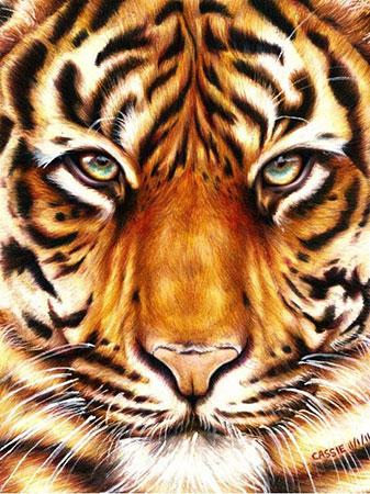Malen nach Zahlen Bild Tigerblick - WD2360 von Sonstiger Hersteller