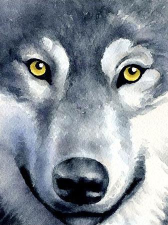 Malen nach Zahlen Bild Wolfsblick - WD2361 von Sonstiger Hersteller