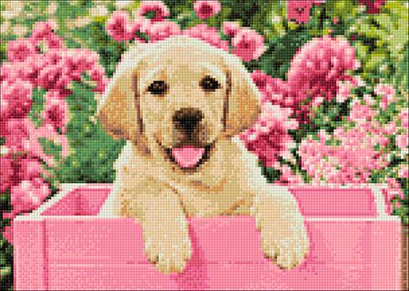 Malen nach Zahlen Bild Labrador-Welpe in pinker Box - WD2414 von Sonstiger Hersteller