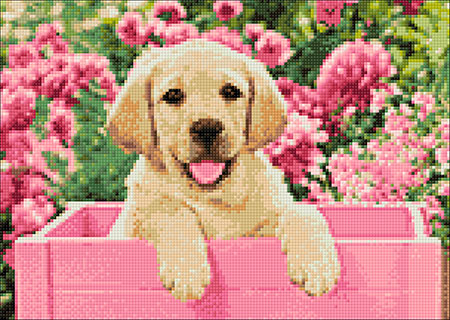Labrador-Welpe in pinker Box