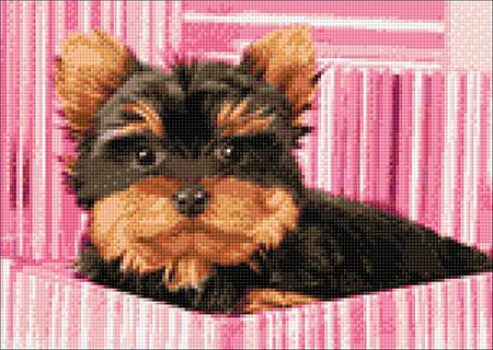 Malen nach Zahlen Bild Yorkshire Terrier in pinker Box - WD2418 von Sonstiger Hersteller