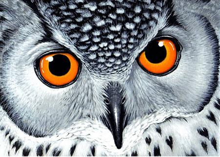 Malen nach Zahlen Bild Mystische Augen - WD243 von Sonstiger Hersteller