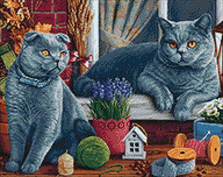 Malen nach Zahlen Bild Britische Kurzhaar-Katze - WD2483 von Sonstiger Hersteller