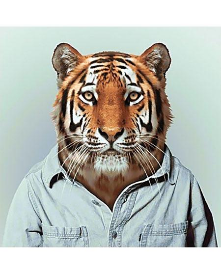 Malen nach Zahlen Bild Herr Tiger - WD258 von Sonstiger Hersteller
