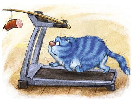 Katze im Training