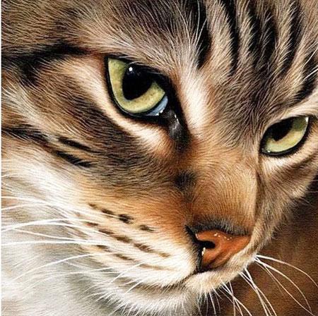 Malen nach Zahlen Bild Geheimnissvolle Katze - WD282 von Sonstiger Hersteller