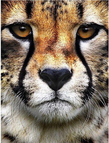 Der Blick des Jägers