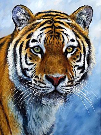Malen nach Zahlen Bild Tiger - WD309 von Sonstiger Hersteller