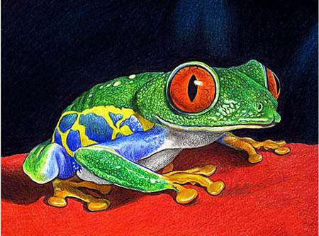 Malen nach Zahlen Bild Grüner Frosch - WD317 von Sonstiger Hersteller
