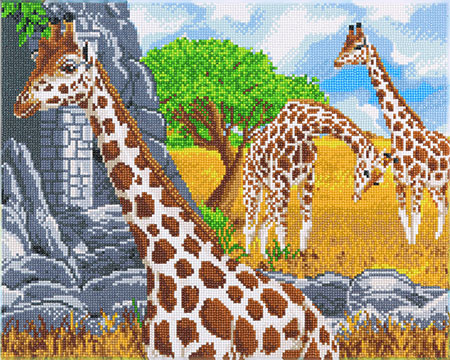 Weidende Giraffen