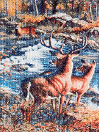 Hirsche am Flusslauf
