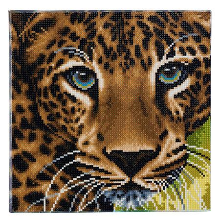 Leoparden-Porträt