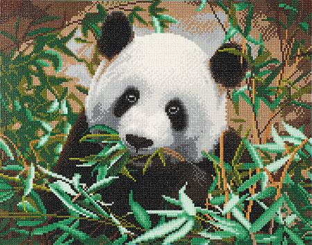 Malen nach Zahlen Bild Süßer Panda - CAK-A90 von Craft Buddy