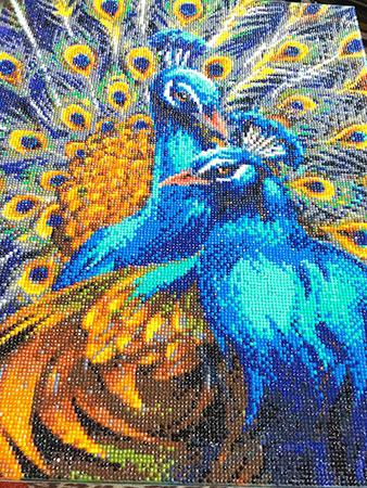 Blau gefiederte Pfauen