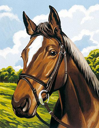 Malen nach Zahlen Bild Pferdeporträt - 105011 von Mammut