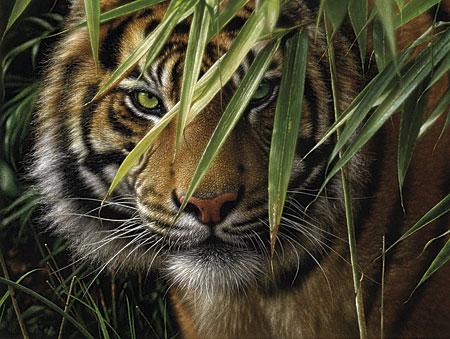 Malen nach Zahlen Bild Tiger - 108007 von Mammut