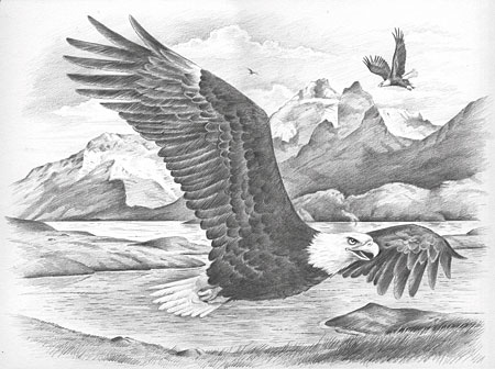 Malen nach Zahlen Bild Adler - 117006 von Mammut