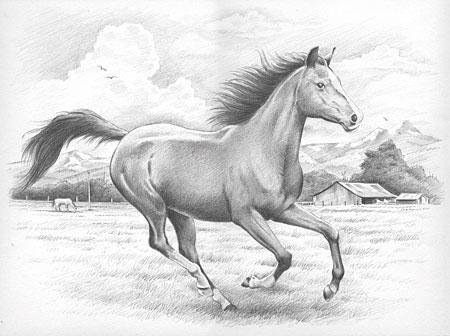 Malen nach Zahlen Bild Pferd im Galopp - 117008 von Sonstiger Hersteller
