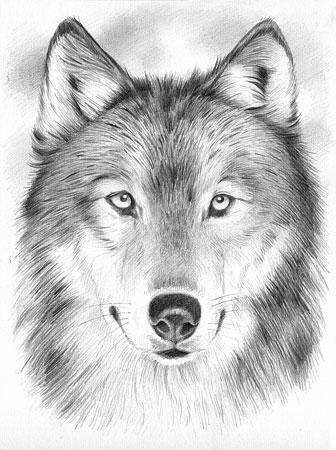 Wolf Von Mammut 147002 Kaufen Bei Kreativ Offensivede