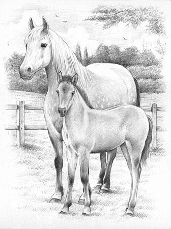 Malen nach Zahlen Bild Pferd mit Fohlen - 147003 von Mammut
