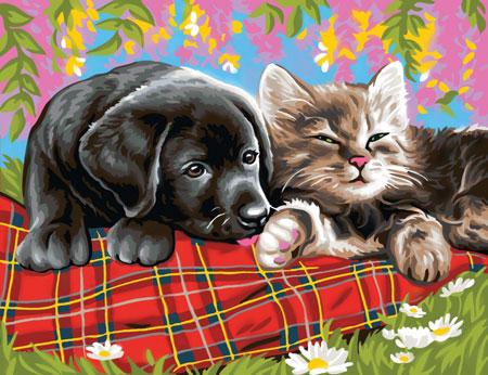 Malen nach Zahlen Bild Hund und Katze - 8241107 von Mammut