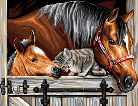Pferde und Katze