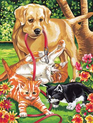3-katzen-und-hund