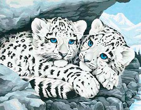Malen nach Zahlen Bild Schneeleoparden Babys - 91079 von Sonstiger Hersteller