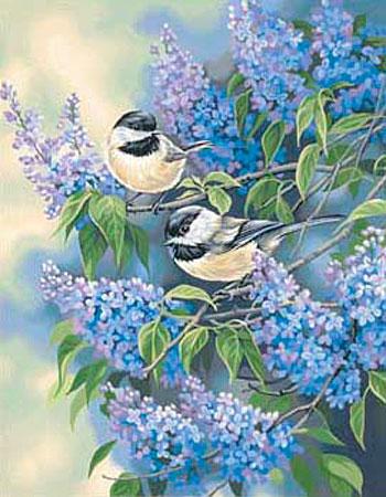 Vögel im Flieder