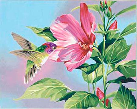 Malen nach Zahlen Bild Kolibri an Blüte - 91419 von Paintworks