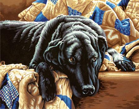 Labrador auf der Couch