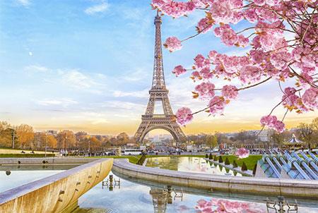 Malen nach Zahlen Bild Kirschblüte in Paris - mg2133e von Protsvetnoy