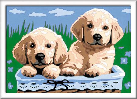 Malen nach Zahlen Bild Süße Hundewelpen           - 27839 von Ravensburger