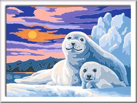 Niedliche Robben
