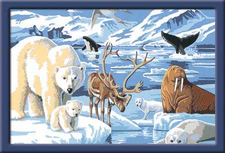 Malen nach Zahlen Bild Tiere der Arktis             - 28909  von Ravensburger