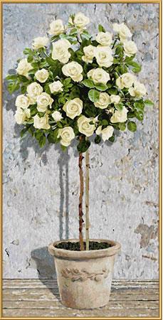 Malen nach Zahlen Bild Rosenbäumchen Weiß - 609220777 von Schipper