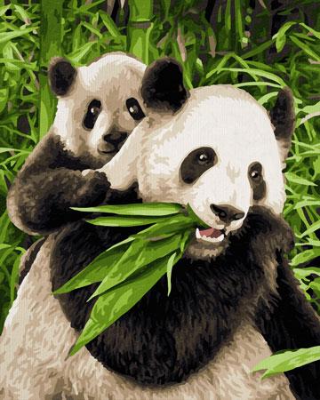 Malen nach Zahlen Bild Pandabären - 609240712 von Schipper
