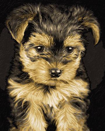 Malen nach Zahlen Bild Niedlicher Yorkshire Terrier - 609240720 von Schipper